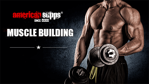 Muscle Building Sports Nutrition
